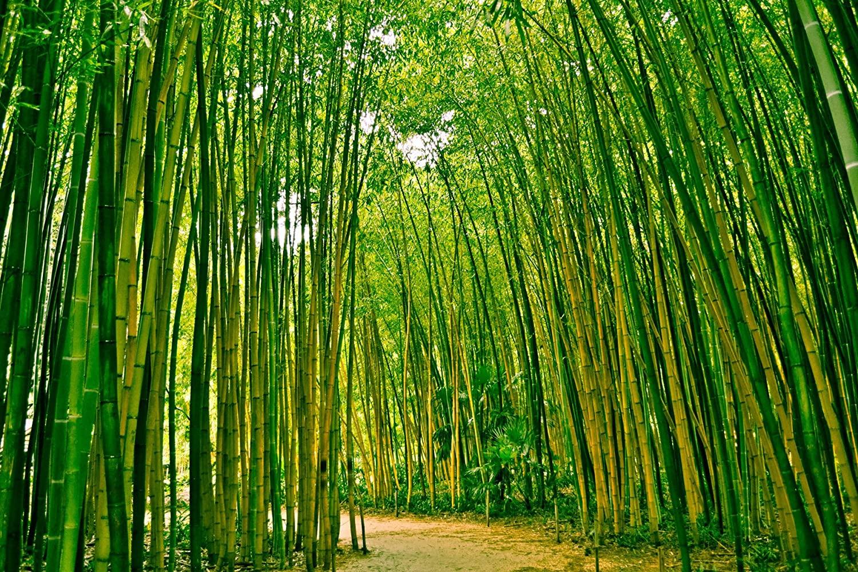 La fibre de Bambou: nouvel or vert pas si écologique qu'on pense